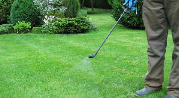 Lawn Treatments Brentwood