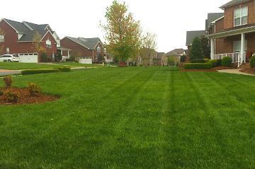 Healthy Greener Lawn