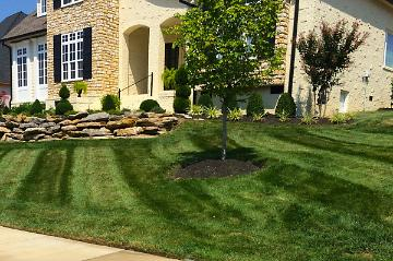 New Lawn and Landscaping